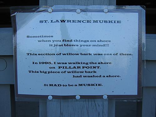 St. Lawrence Muskie