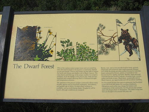 The Dwarf Forest