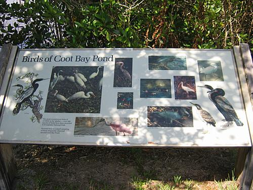 Birds of Coot Bay Pond