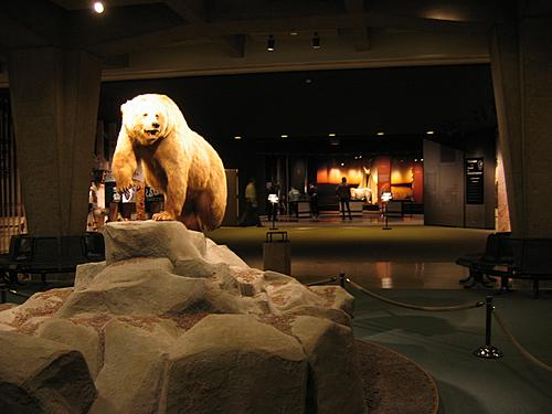 Museum of Westward Expansion - Bear