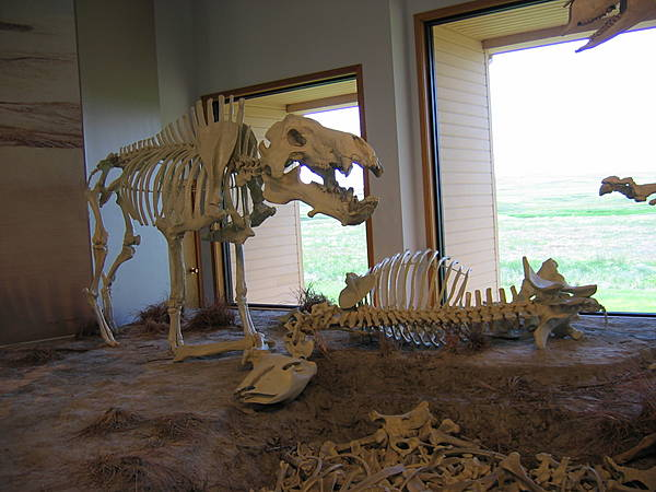 Entelodont & Chalicothere Fossils