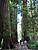 Muir Woods National Monument 74