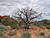 Dead Tree Along Dark Angel Trail - Devils Garden